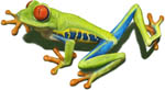 A red eyed green tree frog